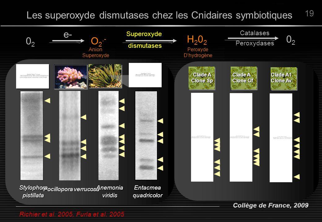 Les superoxyde dismutases chez les Cnidaires symbiotiques