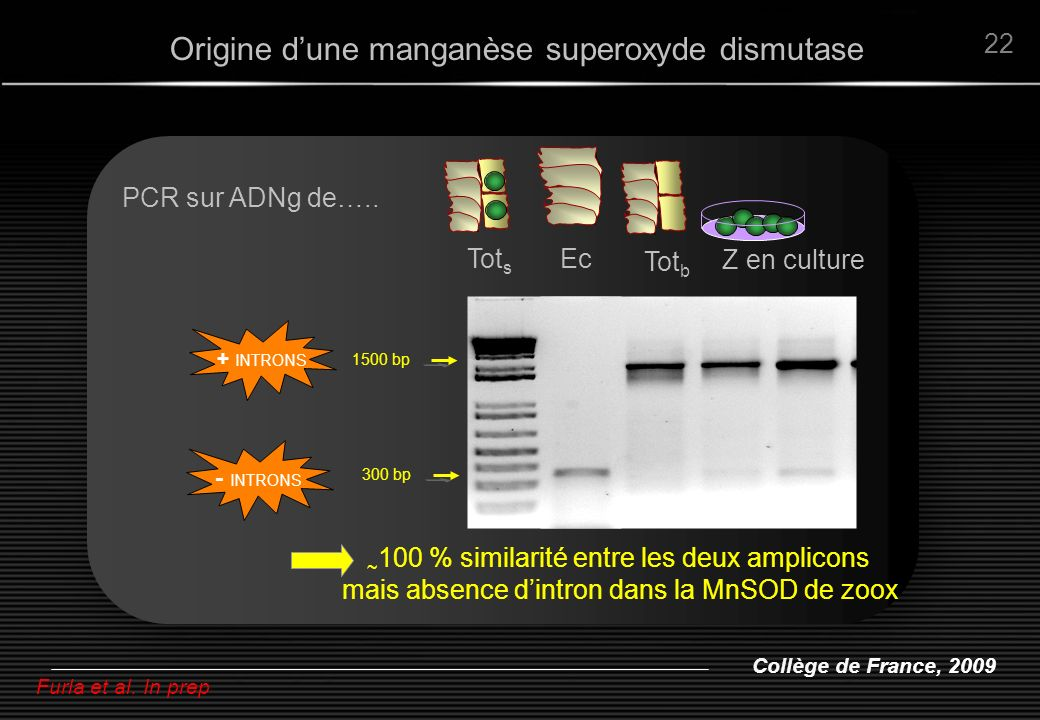 Origine d'une manganèse superoxyde dismutase
