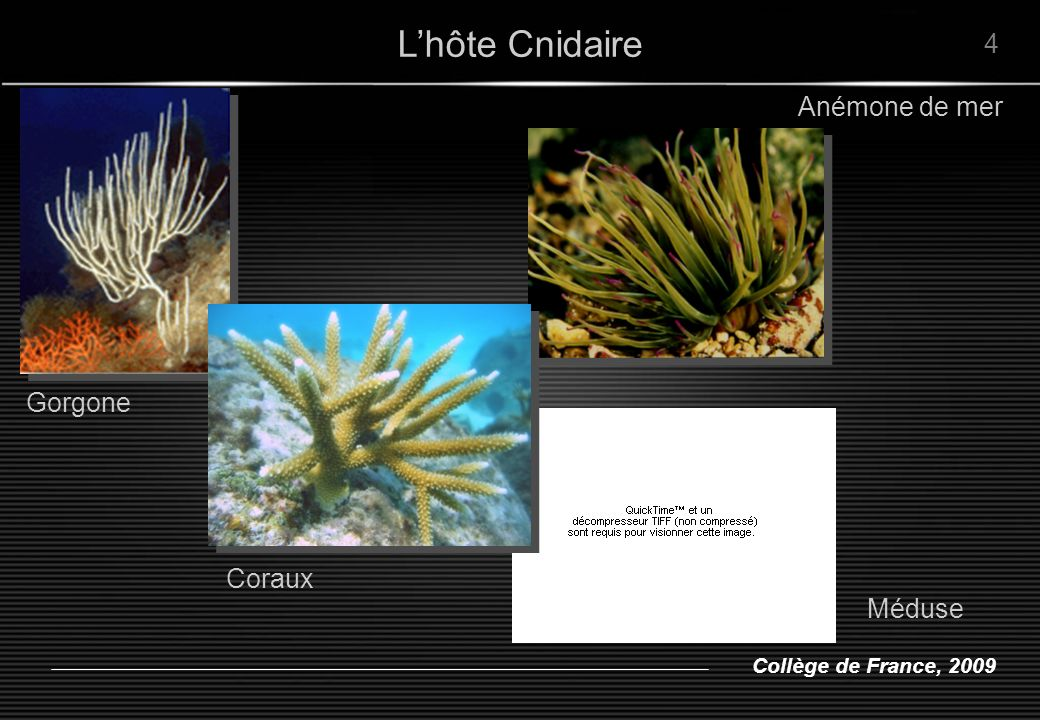 L'hôte Cnidaire 4. Anémone de mer. Gorgone.