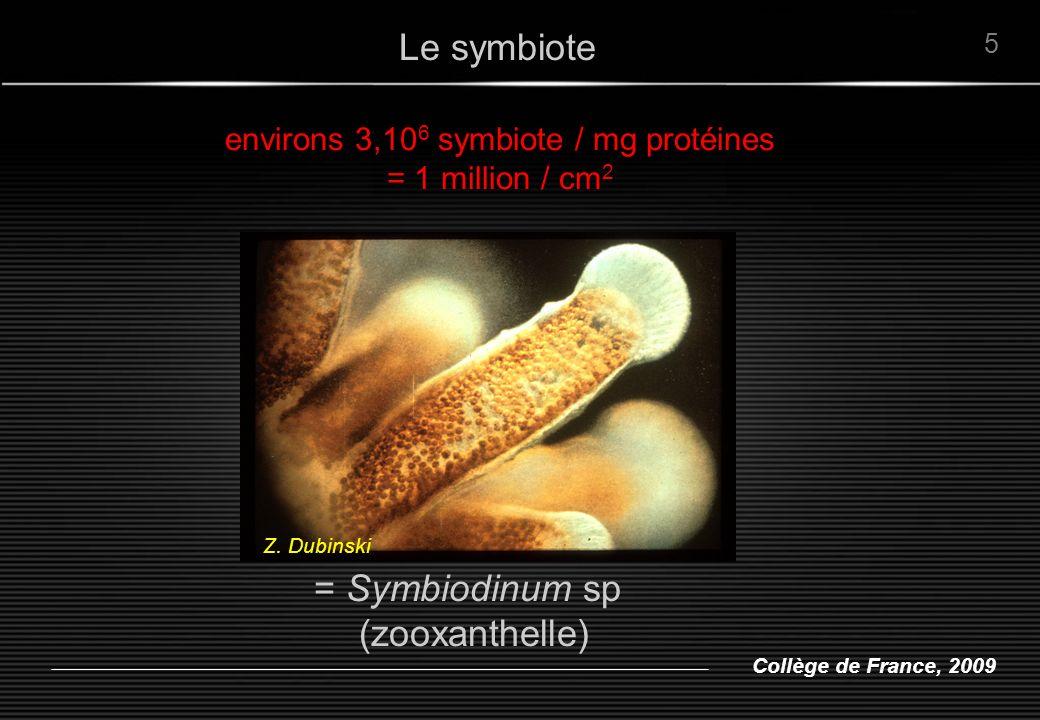 environs 3,106 symbiote / mg protéines