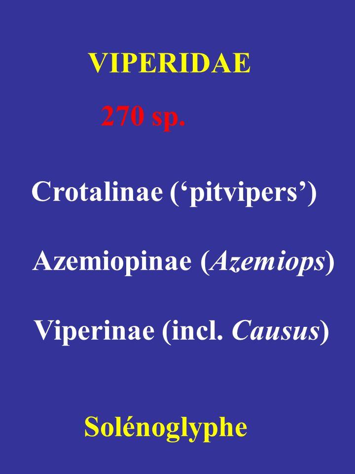 Azemiopinae (Azemiops) Viperinae (incl. Causus)