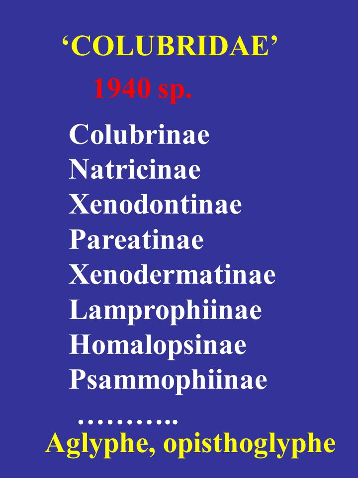 'COLUBRIDAE' 1940 sp. Colubrinae. Natricinae. Xenodontinae. Pareatinae. Xenodermatinae. Lamprophiinae.