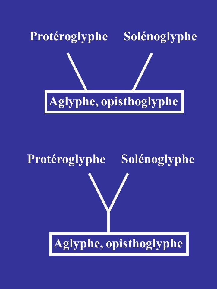 Protéroglyphe Solénoglyphe. Aglyphe, opisthoglyphe.