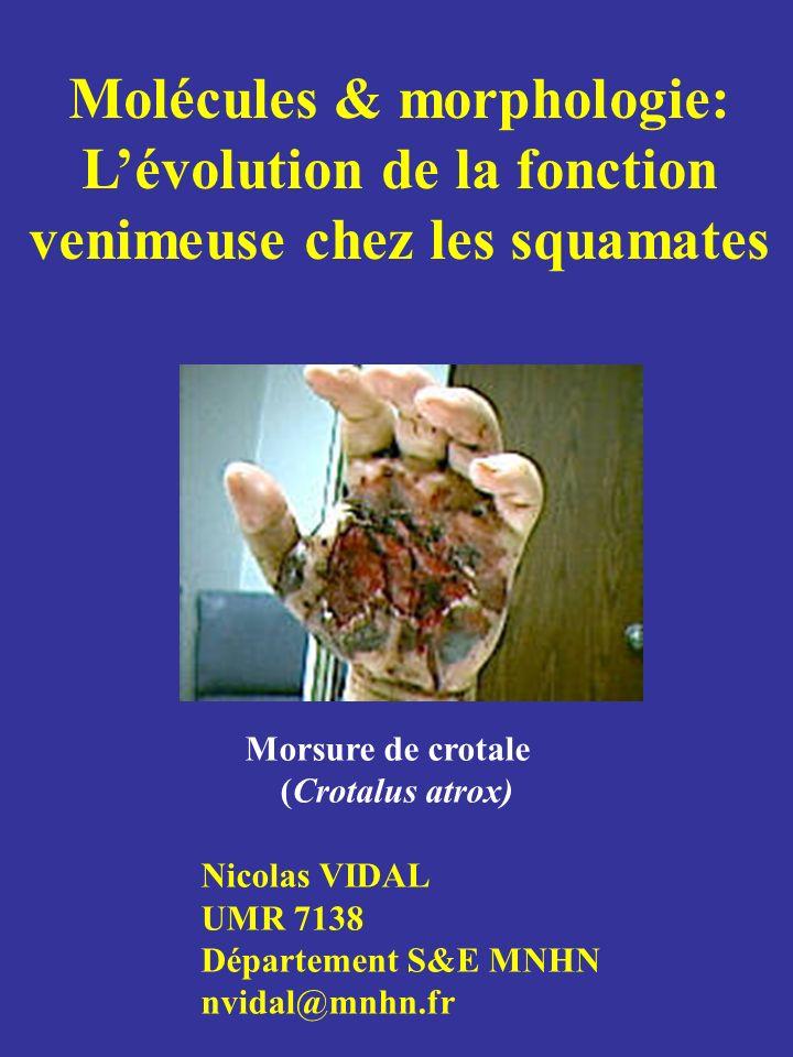 Molécules & morphologie: L'évolution de la fonction