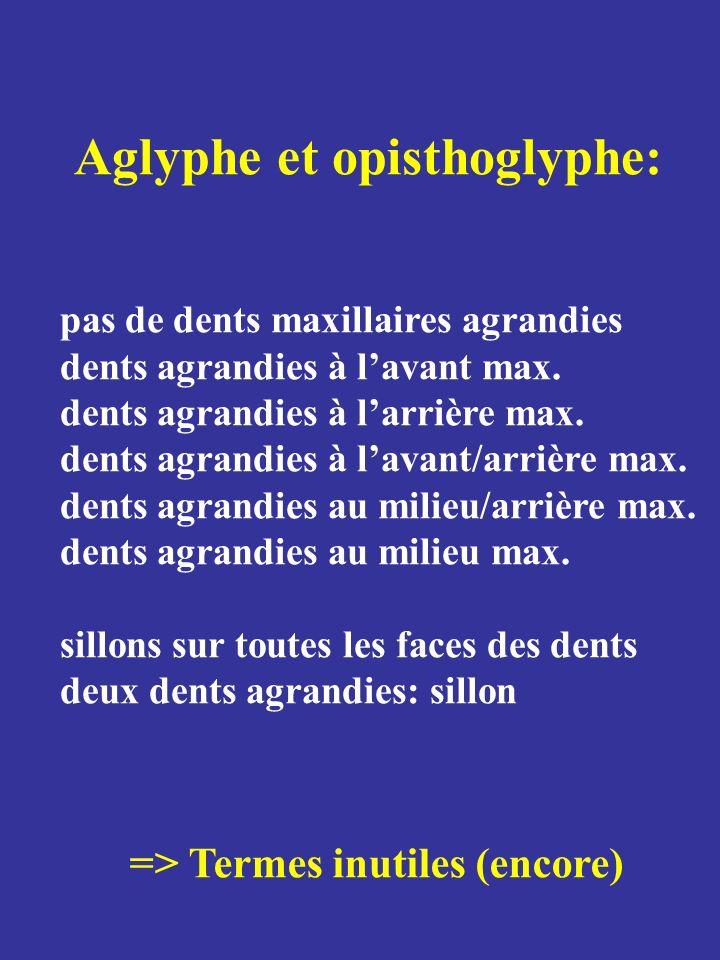 Aglyphe et opisthoglyphe: