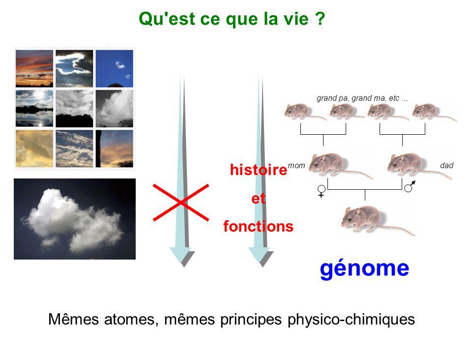 génome Qu est ce que la vie histoire et fonctions