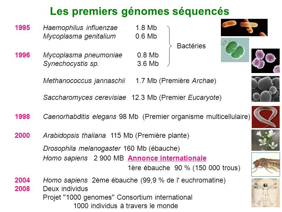 Les premiers génomes séquencés