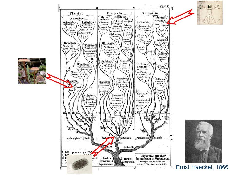 Ernst Haeckel, 1866