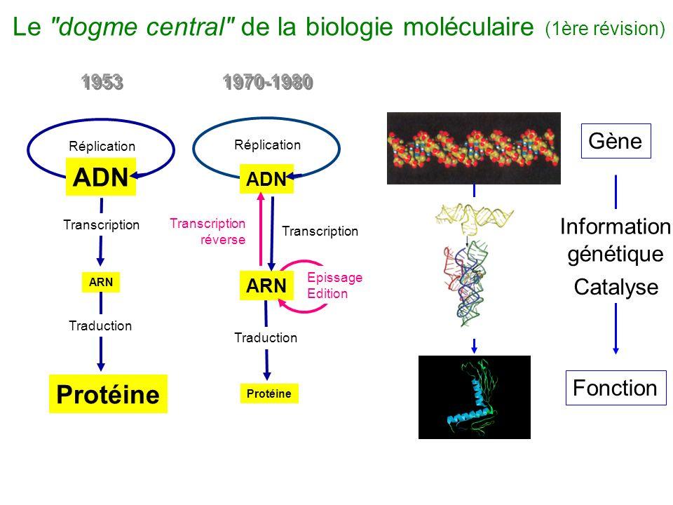 Le dogme central de la biologie moléculaire (1ère révision)