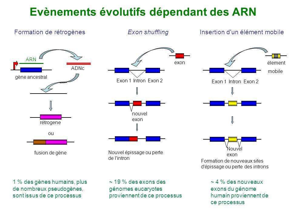 Evènements évolutifs dépendant des ARN