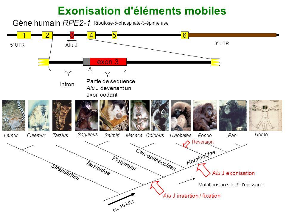 Exonisation d éléments mobiles