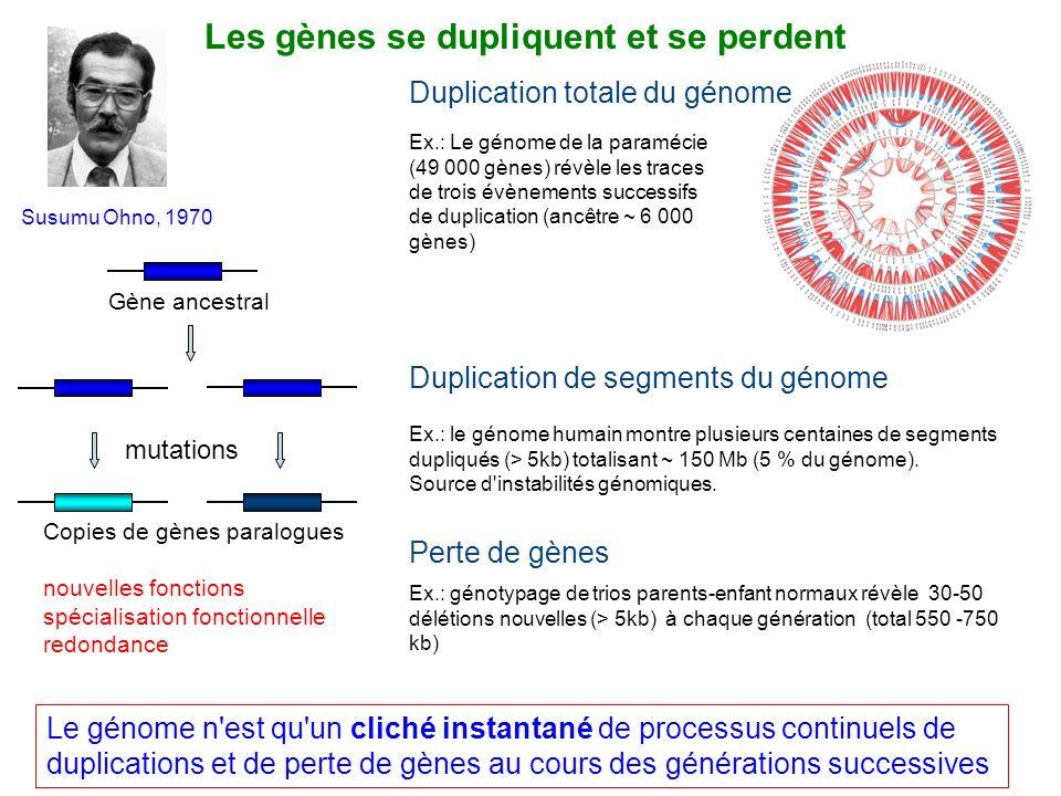 Les gènes se dupliquent et se perdent