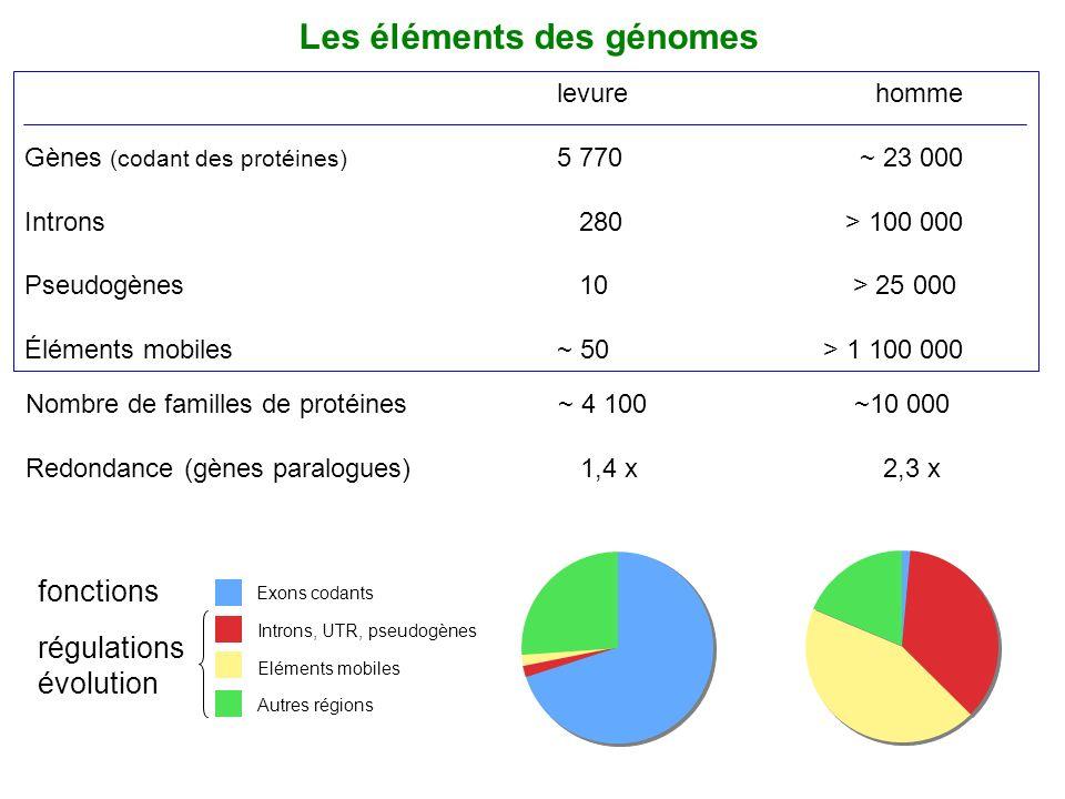Les éléments des génomes
