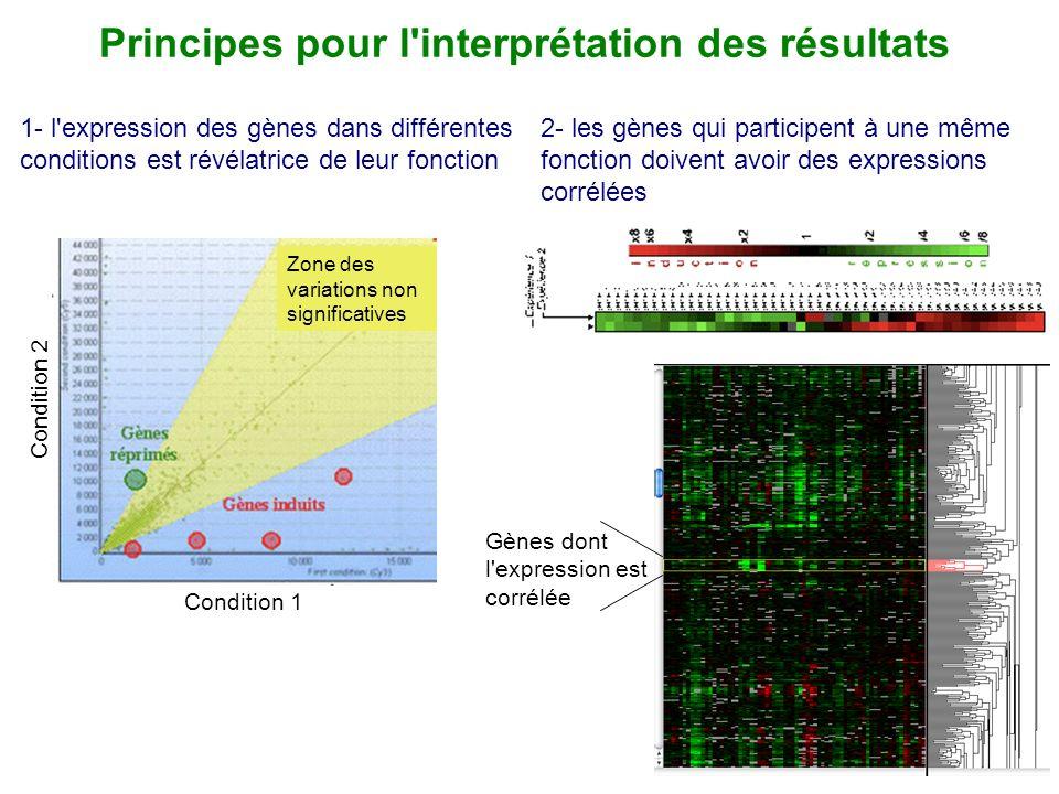 Principes pour l interprétation des résultats