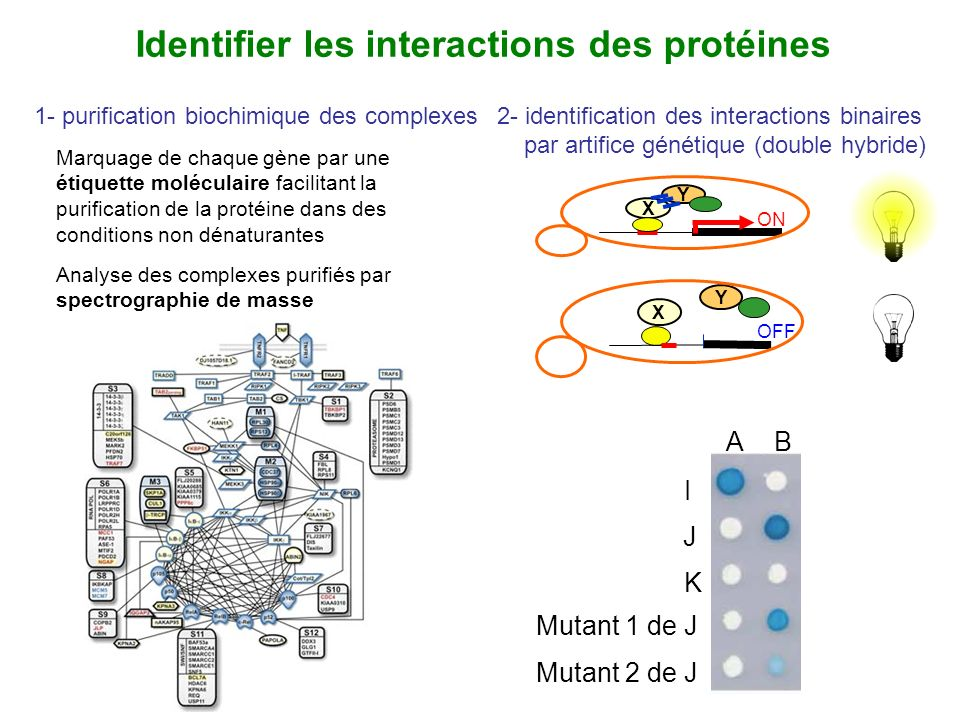 Identifier les interactions des protéines