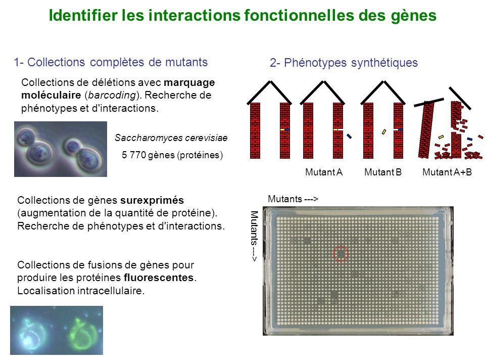 Identifier les interactions fonctionnelles des gènes