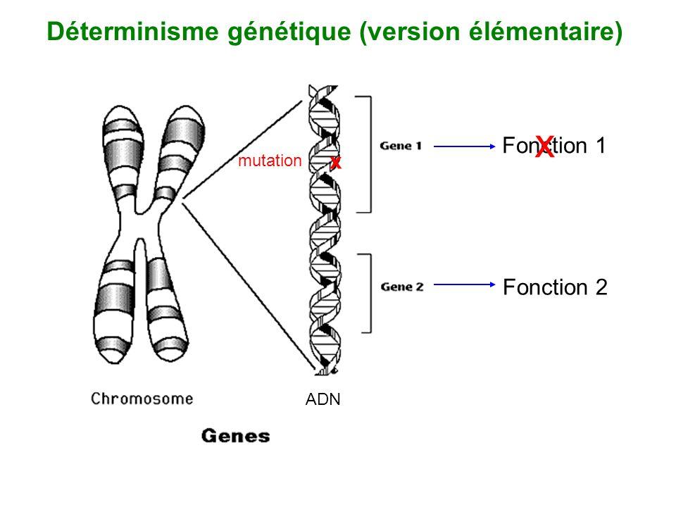 Déterminisme génétique (version élémentaire)
