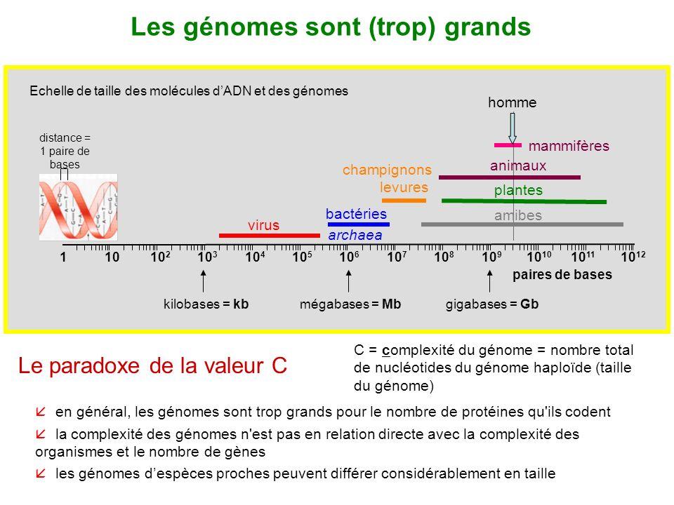 Les génomes sont (trop) grands