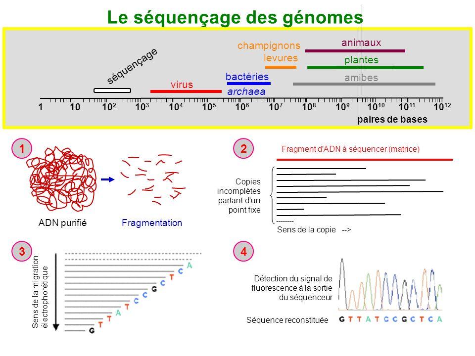 Le séquençage des génomes
