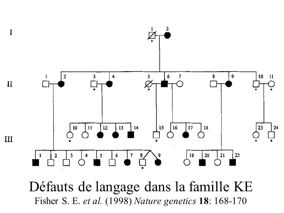 Défauts de langage dans la famille KE Fisher S. E. et al