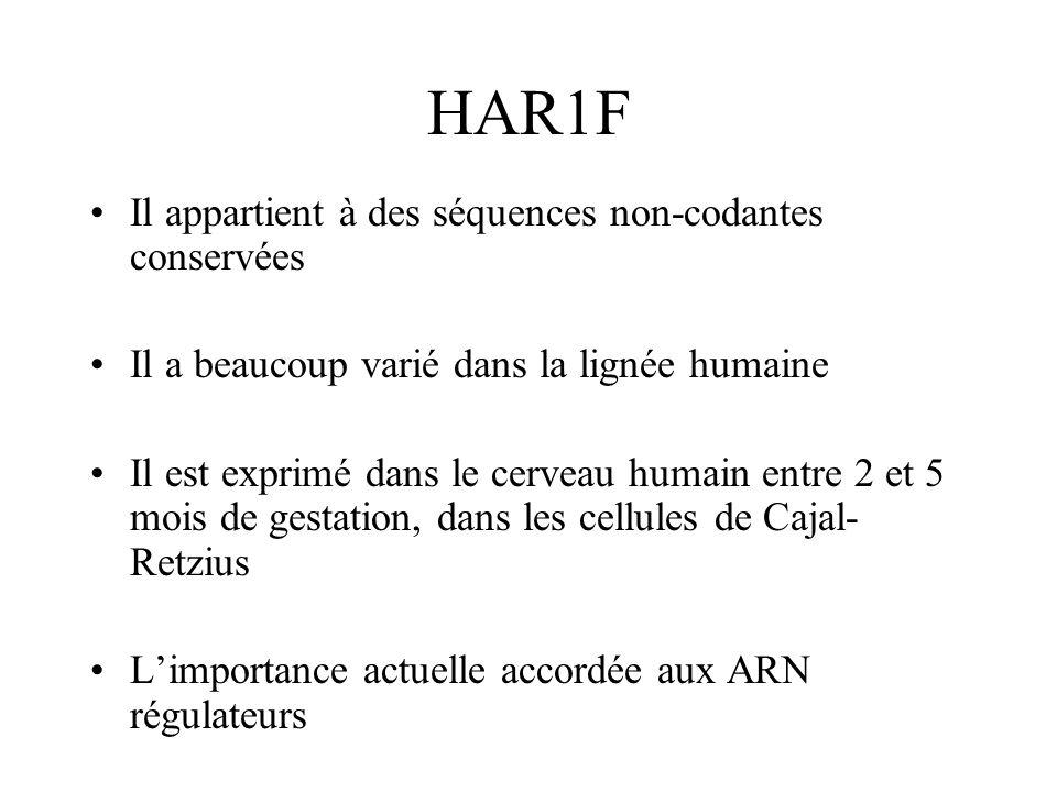 HAR1F Il appartient à des séquences non-codantes conservées