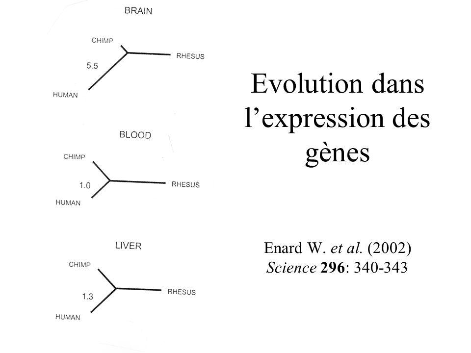 Evolution dans l'expression des gènes Enard W. et al
