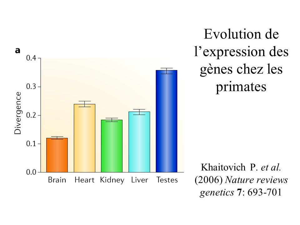 Evolution de l'expression des gènes chez les primates Khaitovich P