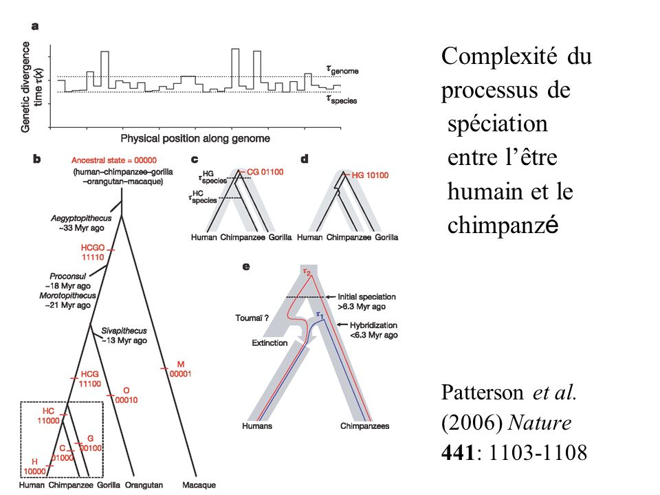 Complexité du processus de spéciation entre l'être humain et le