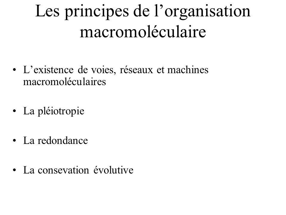 Les principes de l'organisation macromoléculaire