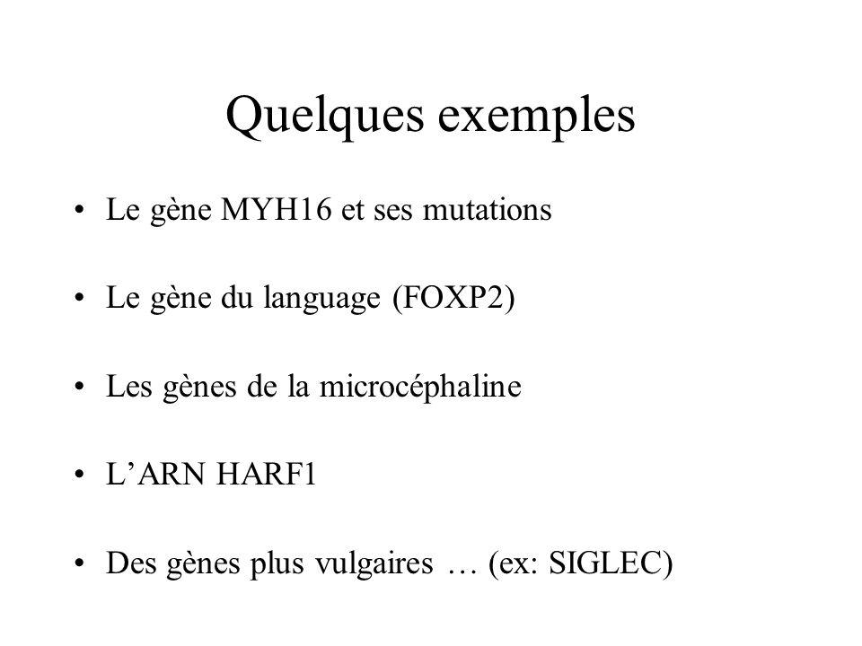 Quelques exemples Le gène MYH16 et ses mutations