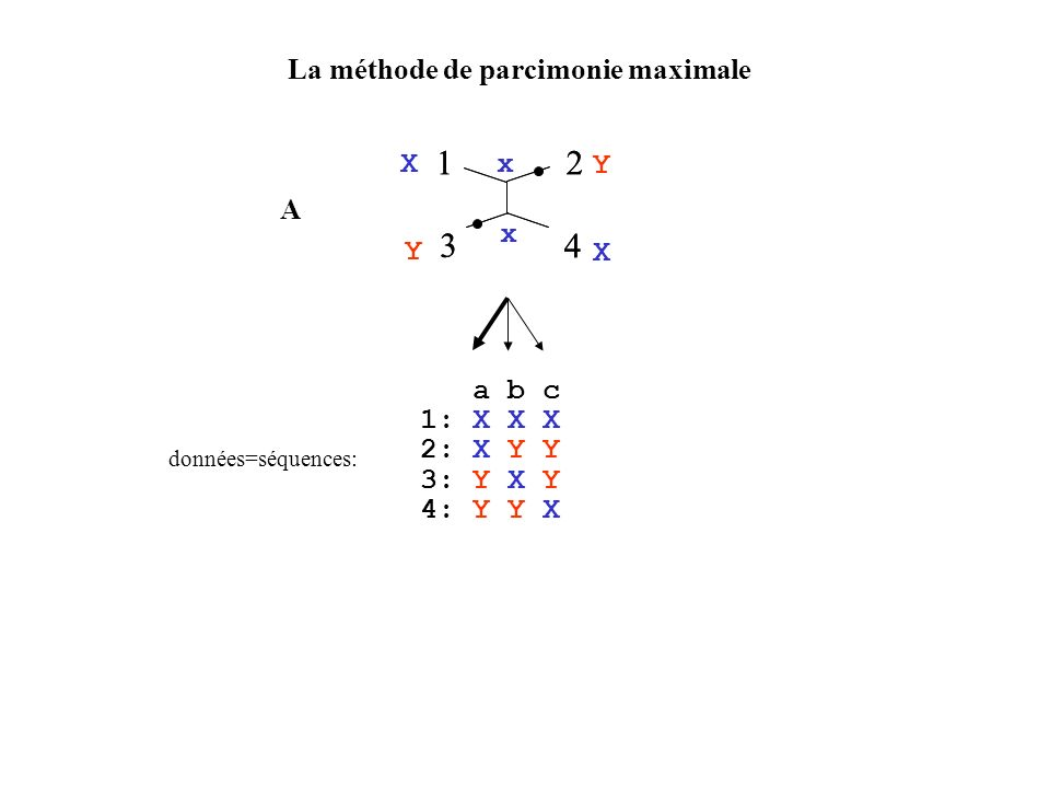 1 1 2 3 4 2 3 4 La méthode de parcimonie maximale X Y x A x a b c