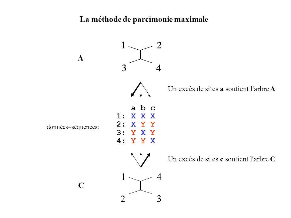 1 2 3 4 1 2 3 4 1 4 2 3 La méthode de parcimonie maximale A a b c