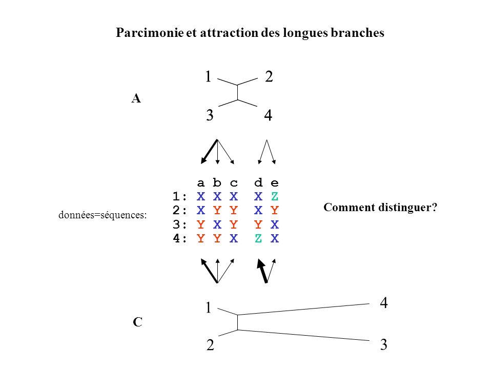 1 1 2 3 4 2 3 4 4 1 2 3 Parcimonie et attraction des longues branches