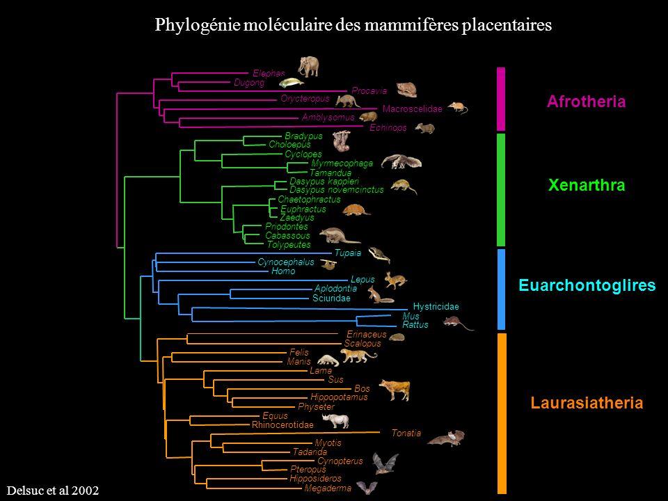 Phylogénie moléculaire des mammifères placentaires