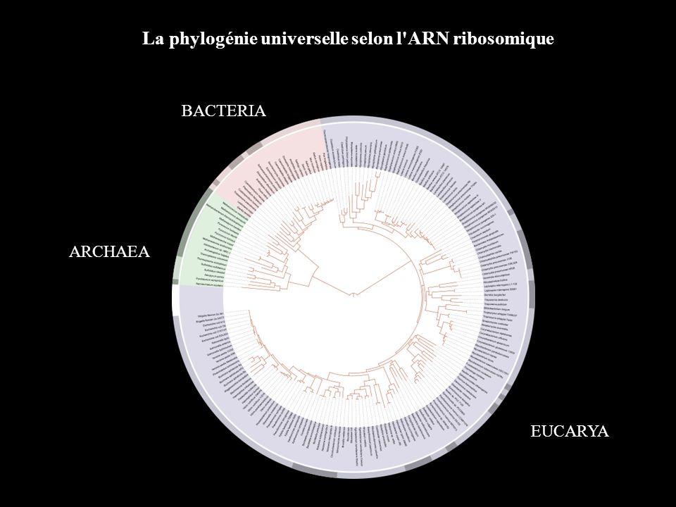 La phylogénie universelle selon l ARN ribosomique