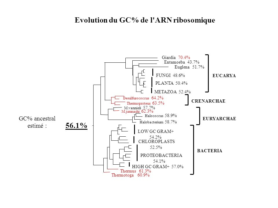 Evolution du GC% de l ARN ribosomique