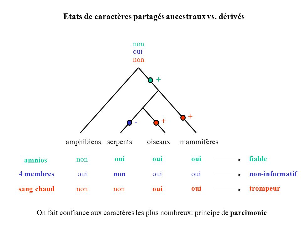 Etats de caractères partagés ancestraux vs. dérivés
