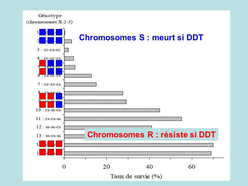 Chromosomes S : meurt si DDT