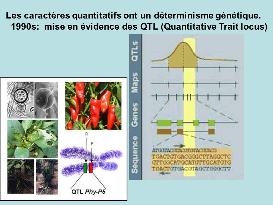 Les caractères quantitatifs ont un déterminisme génétique.