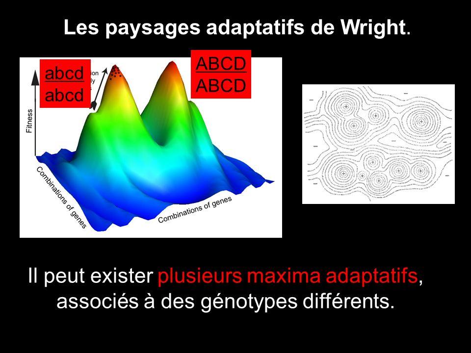 Les paysages adaptatifs de Wright.