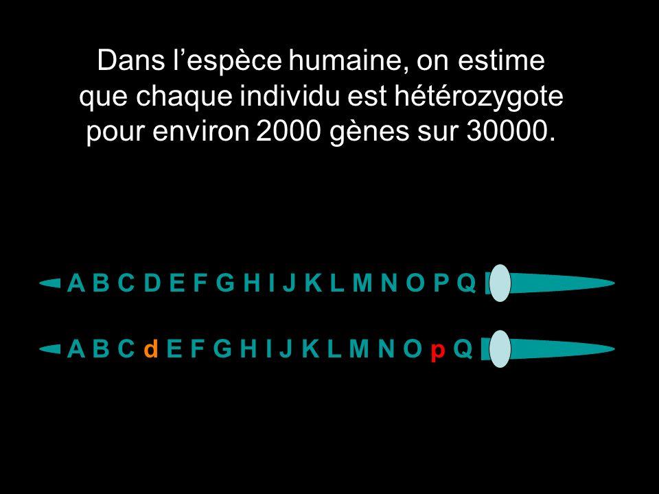 Dans l'espèce humaine, on estime que chaque individu est hétérozygote pour environ 2000 gènes sur 30000.