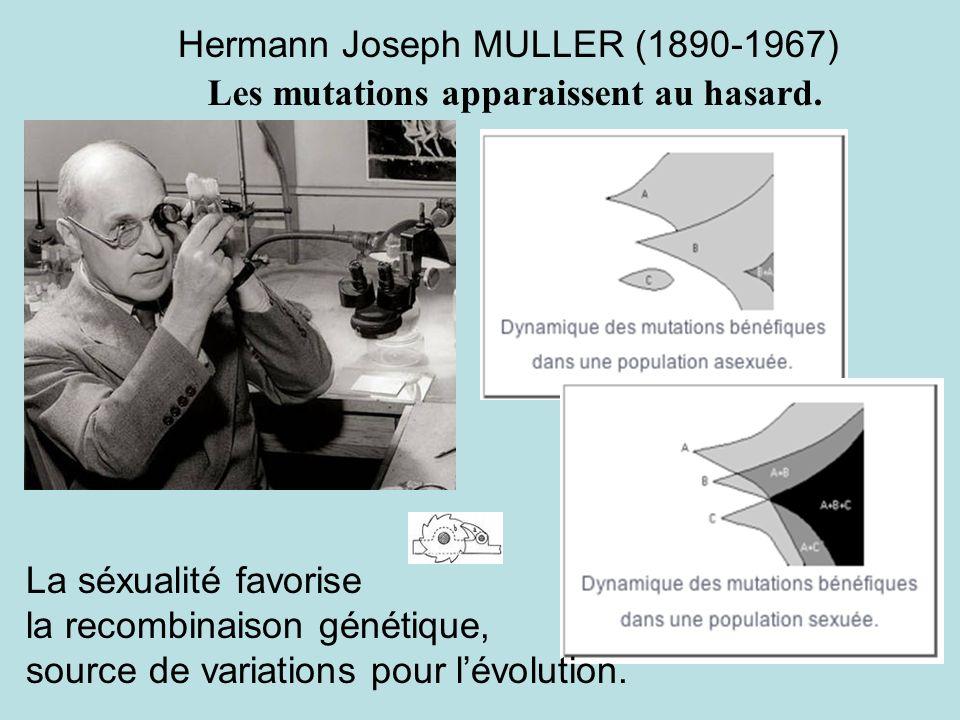 Hermann Joseph MULLER (1890-1967)