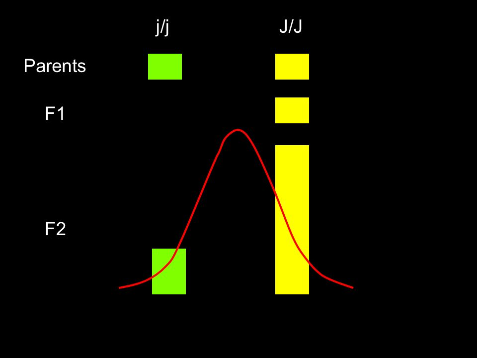 J/J j/j Parents F1 F2