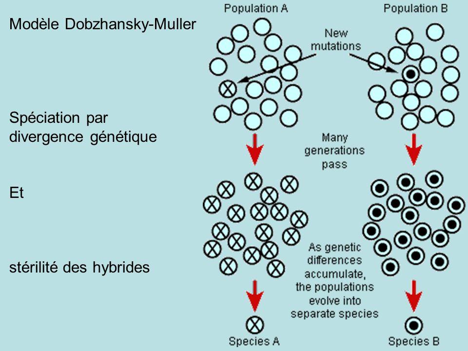 Modèle Dobzhansky-Muller