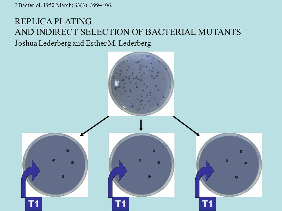 T1 T1 T1 REPLICA PLATING AND INDIRECT SELECTION OF BACTERIAL MUTANTS