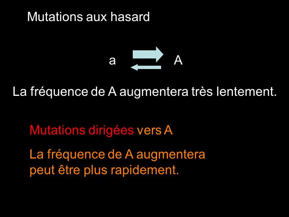 Mutations aux hasard a. A. La fréquence de A augmentera très lentement. Mutations dirigées vers A.
