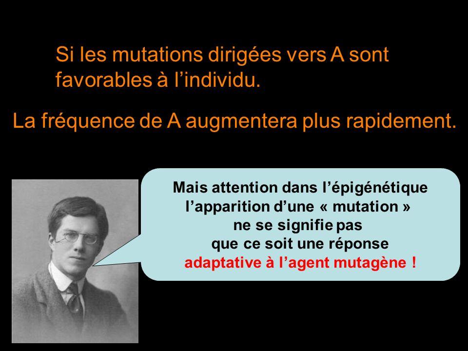 Si les mutations dirigées vers A sont favorables à l'individu.