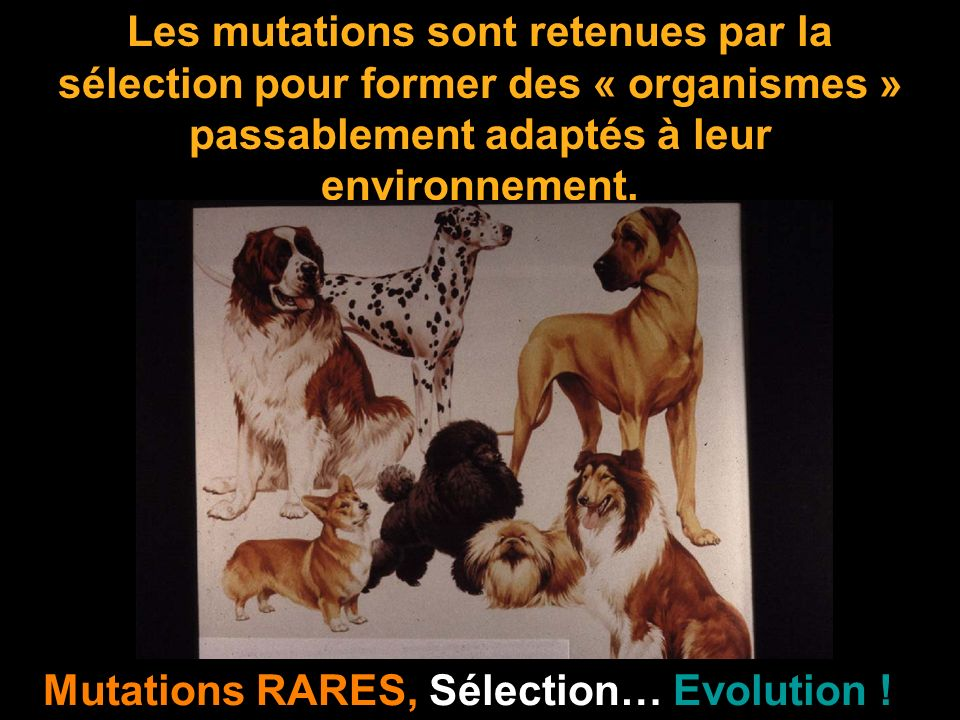 Mutations RARES, Sélection… Evolution !