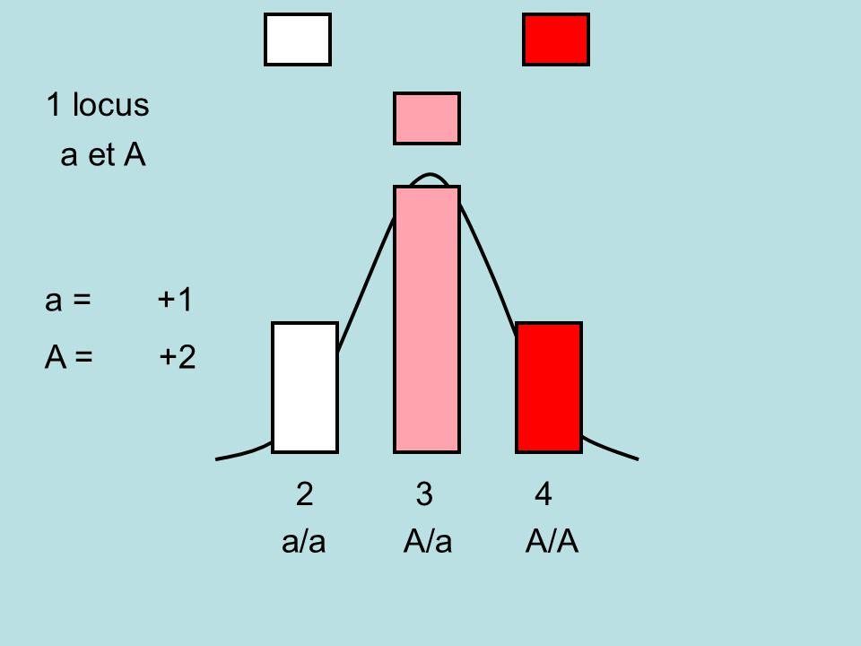 1 locus a et A a = +1 A = +2 A/A A/a a/a 2 3 4