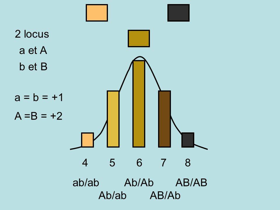 2 locus a et A. b et B. a = b = +1. A =B = +2.